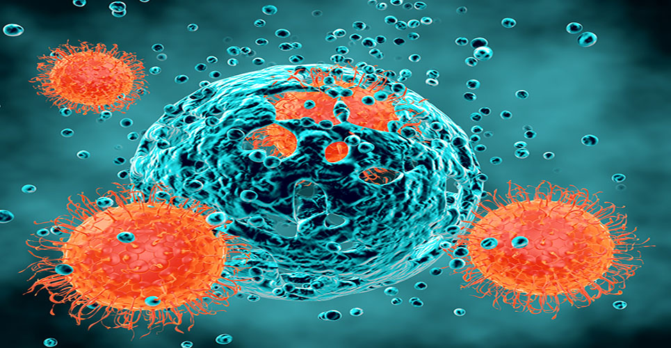 Immune cells discovery could help transform vaccine development