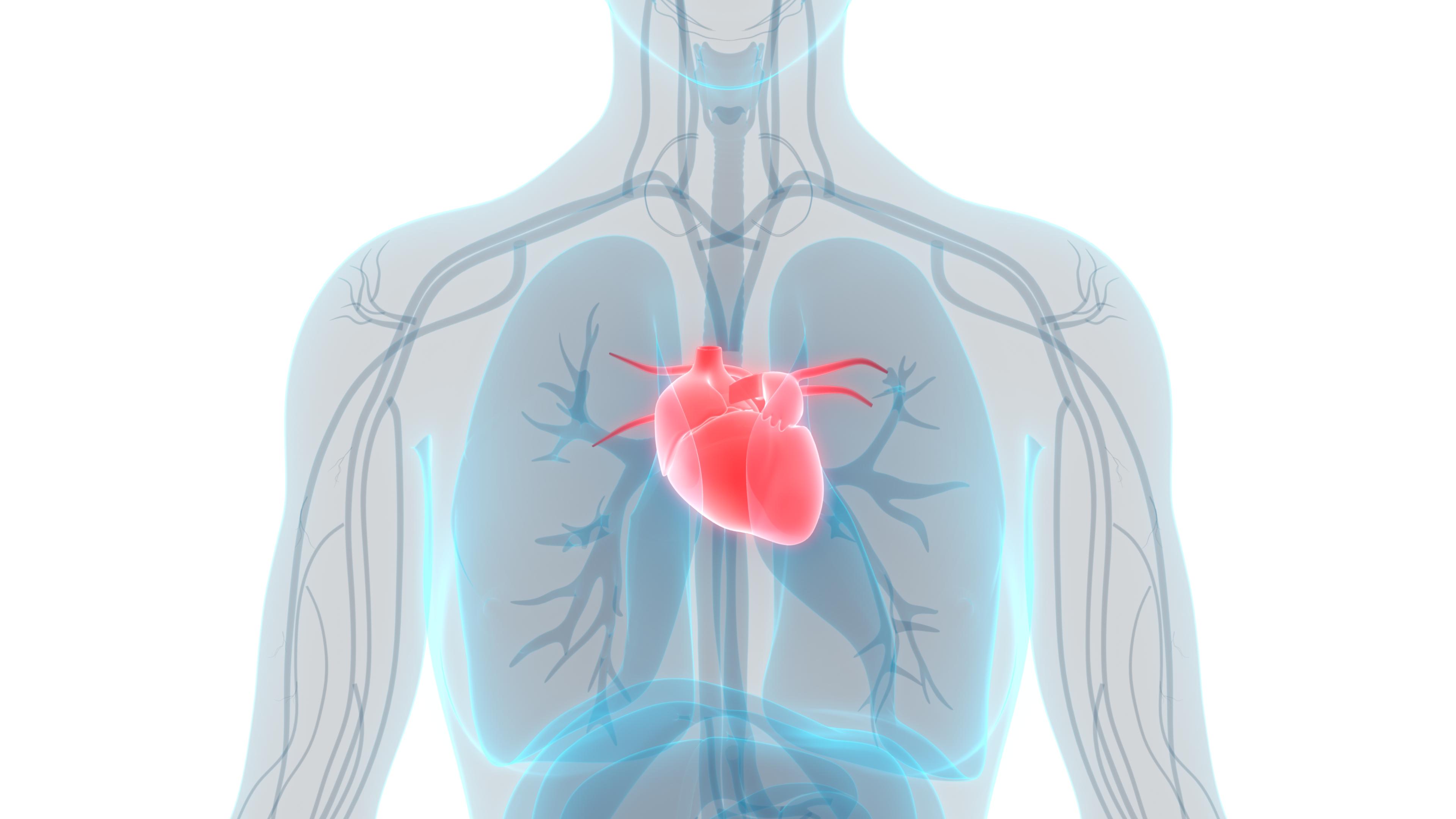 Binge drinking found to impair vascular function